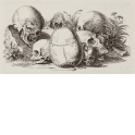 Vanitas (Still life with skulls)