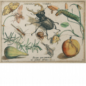 An arrangement of insects, arachnids, fruit and flowers